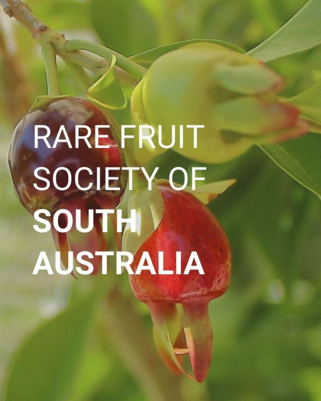 Rare Fruit Society of South Australia