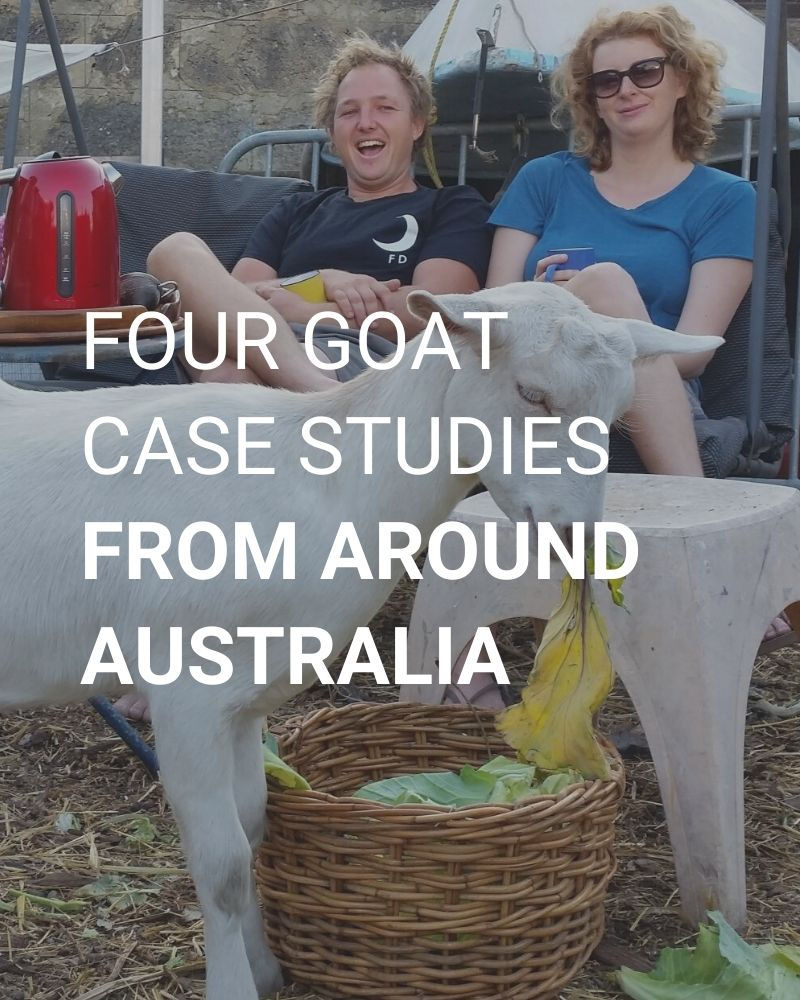 Four goat case studies from around Australia.
