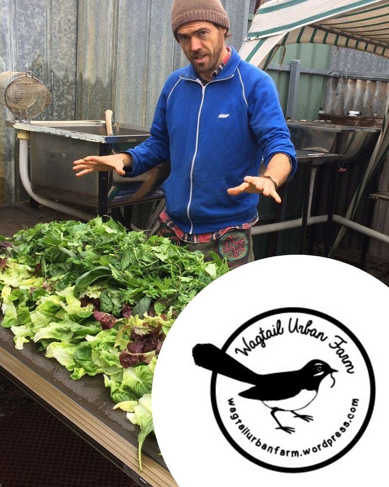 Wagtail Urban Farm