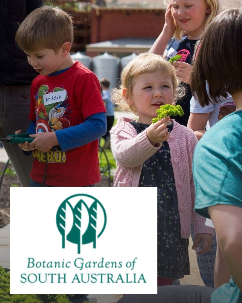 Little Sprouts Kitchen Garden Learning Program