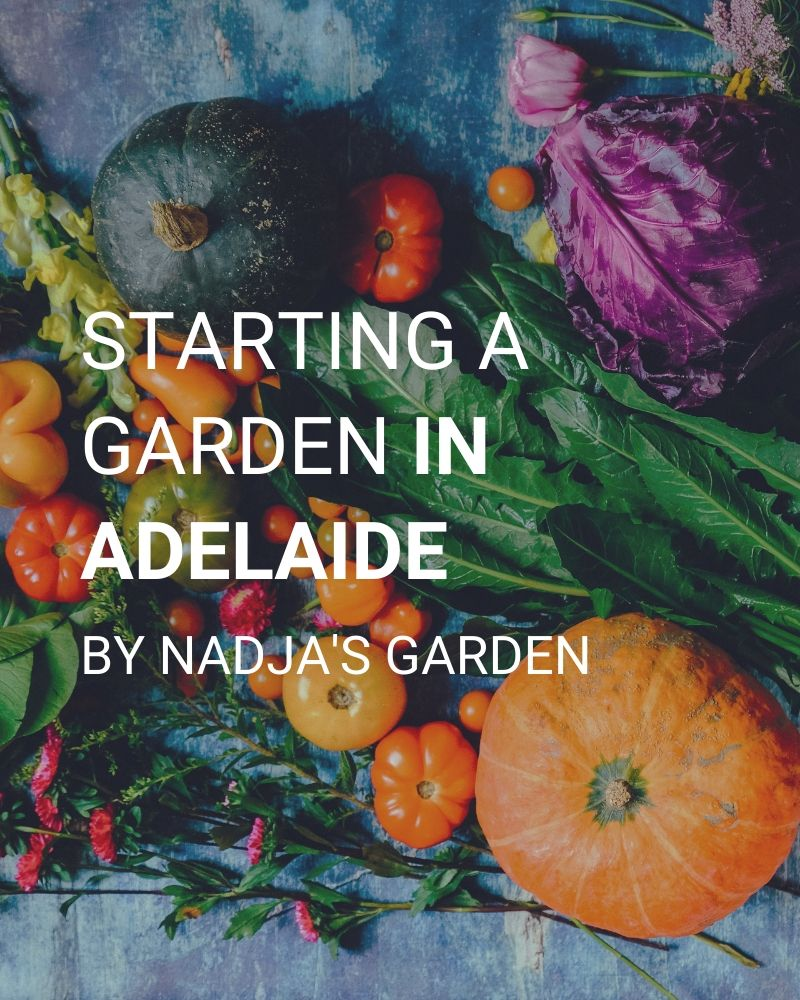 Starting a garden in Adelaide, by Nadja's Garden